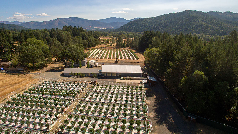 Shadowbox Farms - Applegate Valley, OR